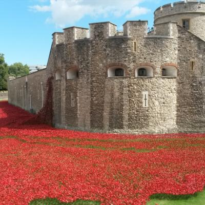 poppies at tower of london